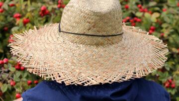 Gesund gärtnern – der Traum vom grünen Paradies